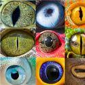 oka zwierzów