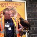 Londyński łapacz gołębi