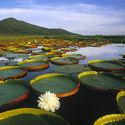 Pantanal, Ameryka Południowa
