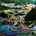 Tarasy ryżowe w Chinach prowincja Yunnan