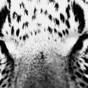 widzę Cię