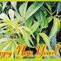 Happy New Year Ujarani