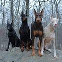 psie crew