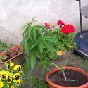 Rośnie rośnie :D