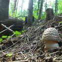 Pierwszy w tym roku wypad na grzyby :) Toteż fungi i nie tylko ...
