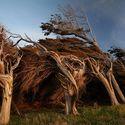 Historia drzew