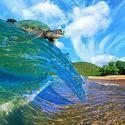 Żółwik na fali