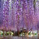 Honshu, Japonia