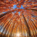 Historia drzew (38)