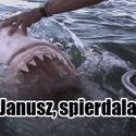 Rekin Janusz