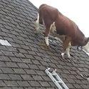 taki kaprys miała: zesrać się na dachu ;)