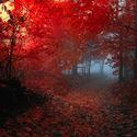 Jesiennie i mrocznie.