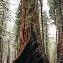Historia drzew (40)