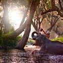 Słonik