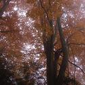 Jesien w Bieszczadach #bieszczady #przyroda