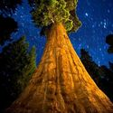 Historia drzew (36)