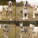 Pies przewodnik ♥