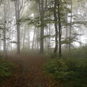 las z mgiełką