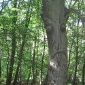 Smutne drzewo