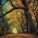 Historia drzew (14)