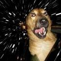 Spacedog ;]
