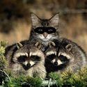 DEA agent undercover
