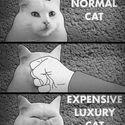 Jak przemienić kota w drogiego kota