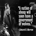 Pokolenie owiec.