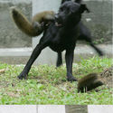 Wiewiórken attaken