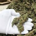 Papież przeciwny legalizacji miękkich narkotyków.