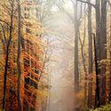 leśna dróżka