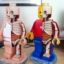 Lego anatomia.