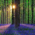 Hallebros Forest