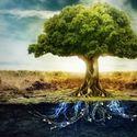 Moc Drzew - Czyli jak medytować z drzewem?