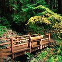 Szumi las, płynie czas, słowa płyną