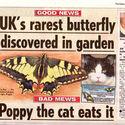 Odnaleziono najrzadszego motyla w UK