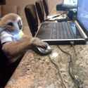 On the Internet no one knows I'm a monkey. No one;)