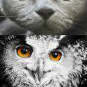Podobieństwa natury.