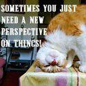 nowa perspektywa