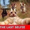 The Last Selfie