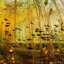Podwodny las.