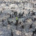 Po pożarze pola