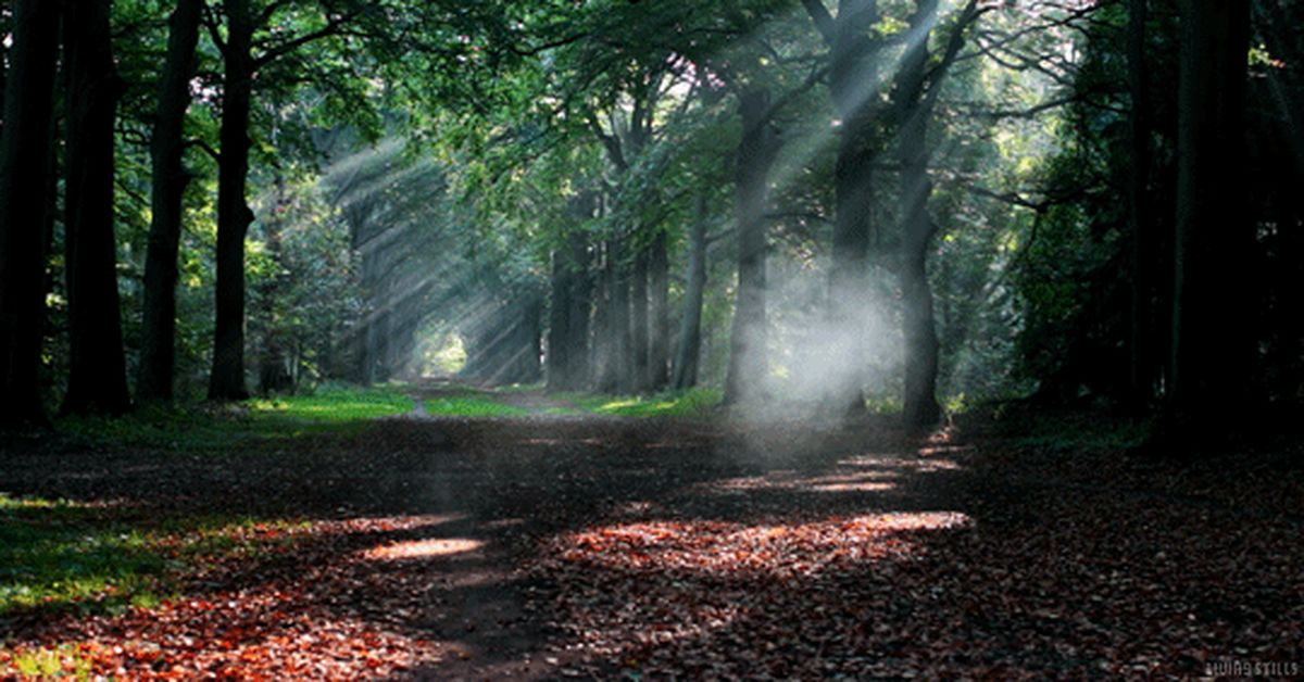 Картинки леса гиф, сделать открытку