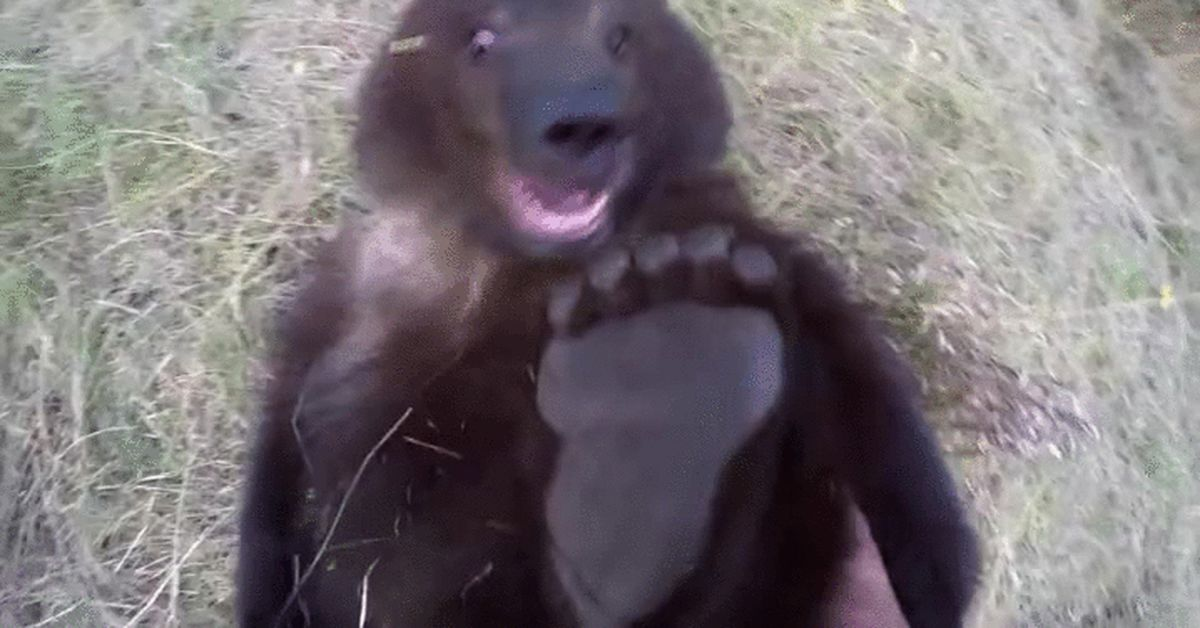 Месяцев, медведи смешные гифки